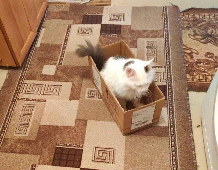 Почему котики так сильно любят коробки?