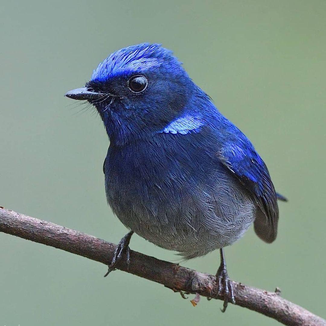 Птицы и животные на фотографиях Рамаканта Кулкарни