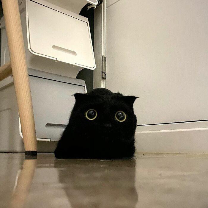 Чёрная кошка МонЧи стала знаменитостью Инстаграма