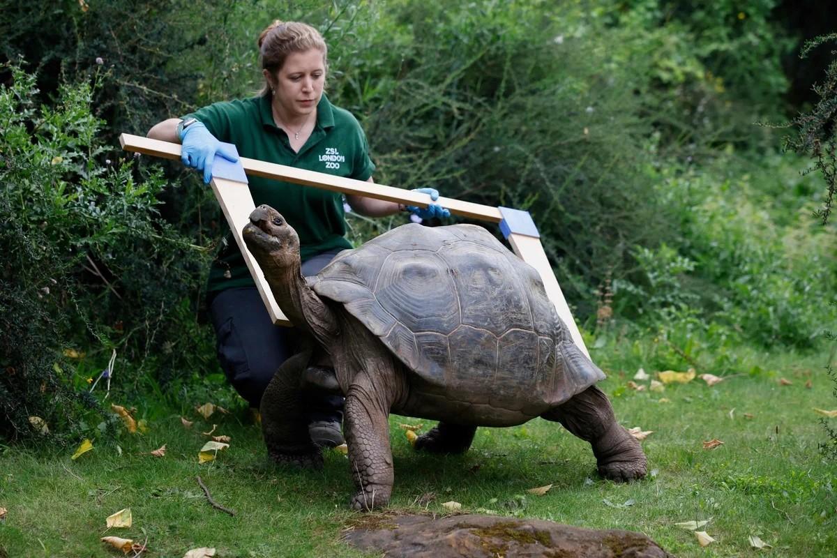 Ежегодное взвешивание животных в лондонском зоопарке