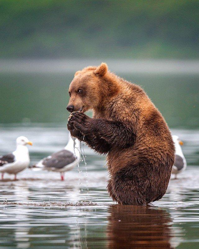 Медведи в подборке приятных снимков