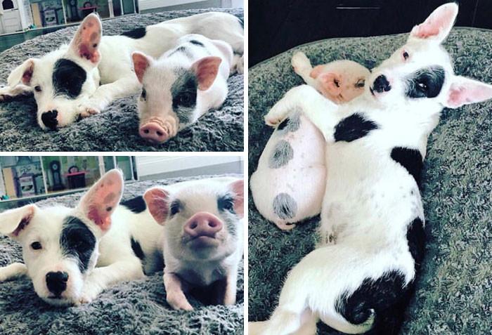 Животные разных видов, которые похожи друг на друга как близнецы