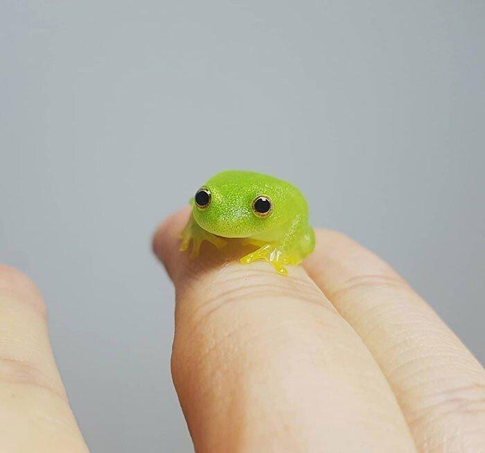 Снимки необычных крошечных животных, которые помещаются на пальцах