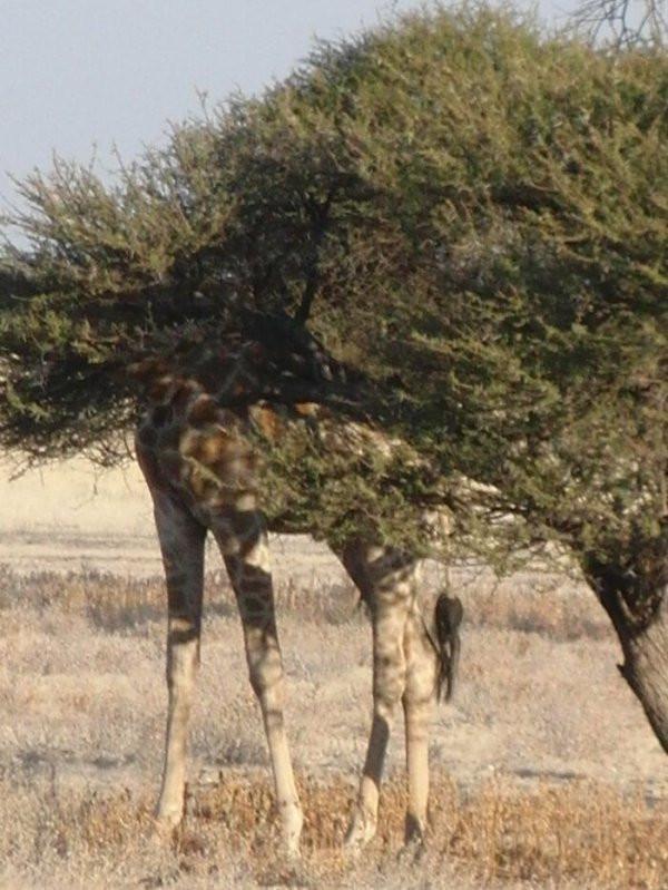 Разные забавные снимки с дикими животными