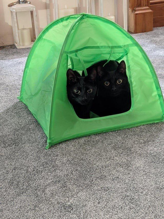 Чёрные котики приносят радость и умиление на снимках