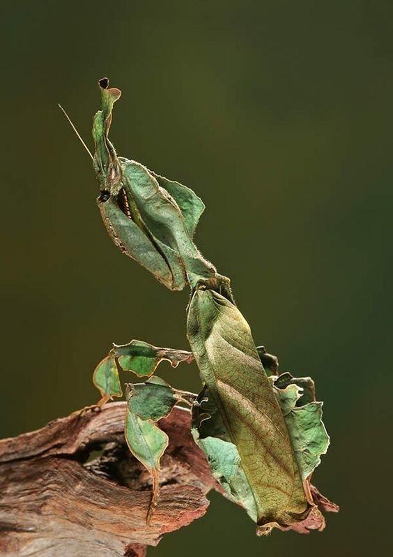 Удивительные природные мастера максировки на снимках