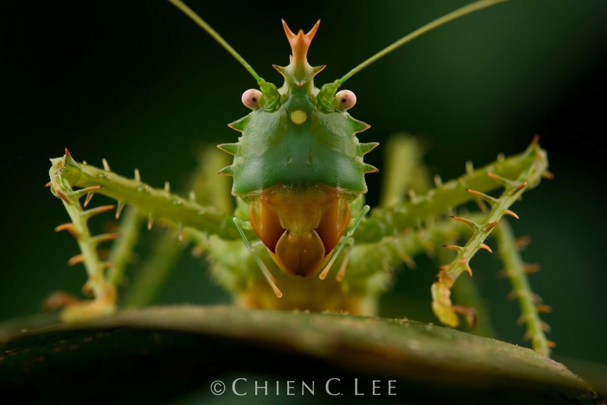 Дикая природа и животные на снимках Чэна Си Ли