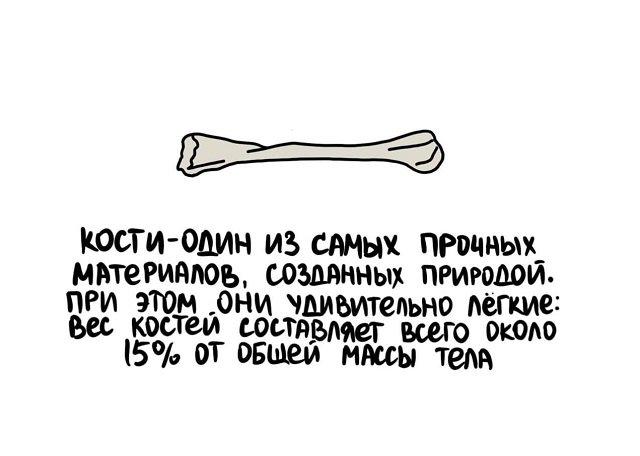 Короткие интересные факты на все случаи жизни