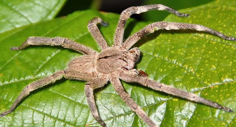 Смертельно опасные насекомые в нашем мире