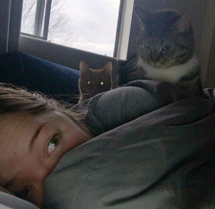 Эти котики дали понять владельцам, кто в доме хозяин Животные