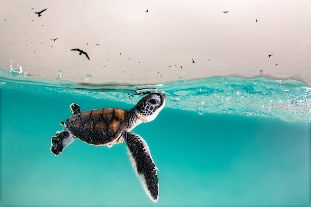 Финалисты конкурса на лучшую морскую фотографию Ocean Photography Awards 2021