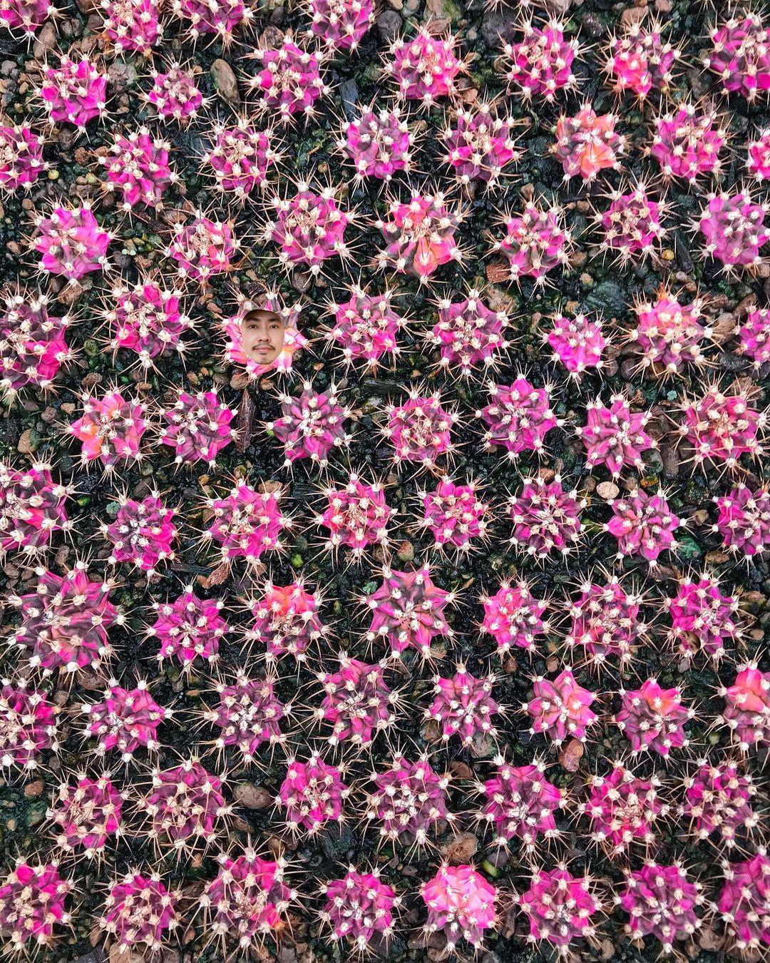Кактусы и другие растения на снимках Ваширапола Дипрома