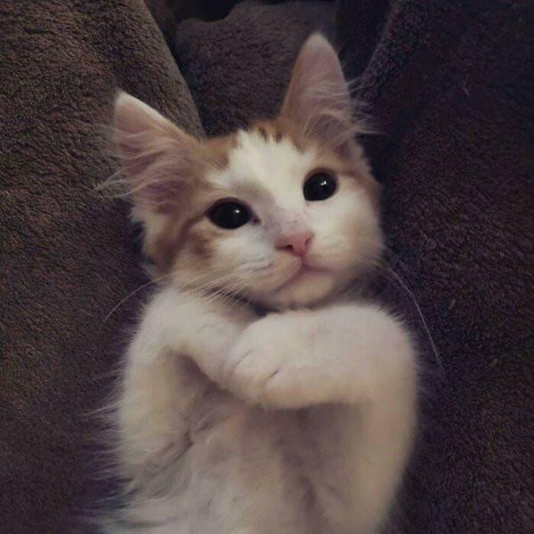 Котики и пёсики, спасённые от бездомной жизни добрыми людьми