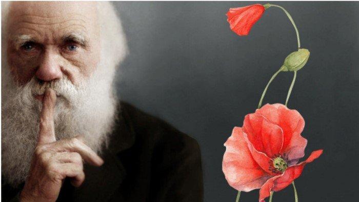 Тайна Дарвина, которая уже 140 лет ставит учёных в тупик