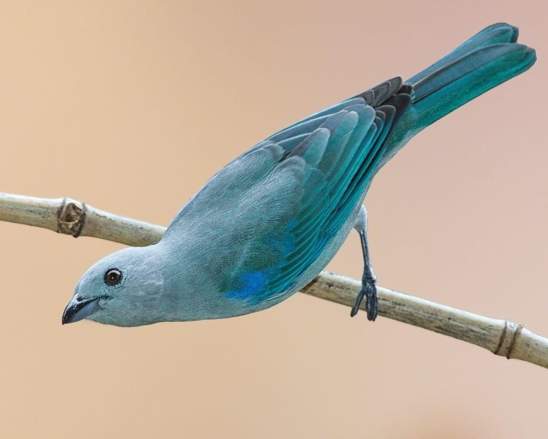 Яркие птицы на снимках Джалила Эль Харрара