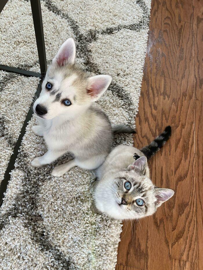 Похожие друг на друга животные, которые принадлежат разным видам