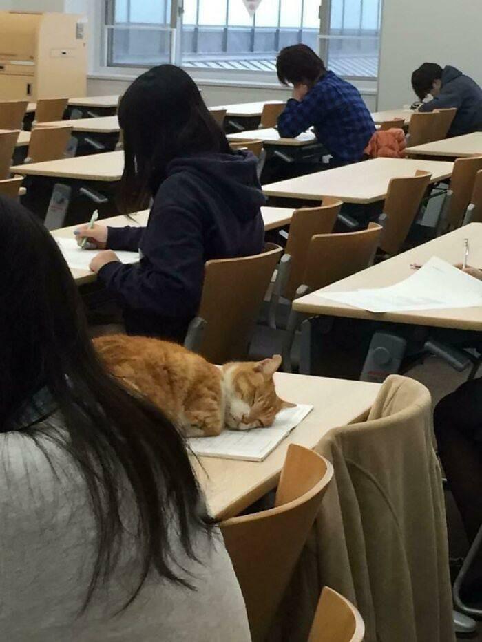 Забавные котики на снимках заряжают позитивом