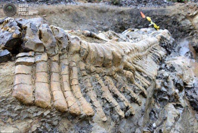 Кости динозавров - совсем даже не кости?