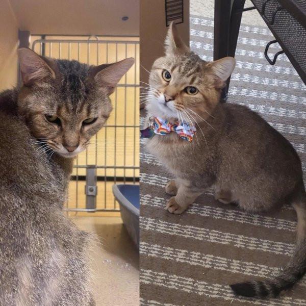 Милые животные до и после того, как они нашли дом и любящих хозяев