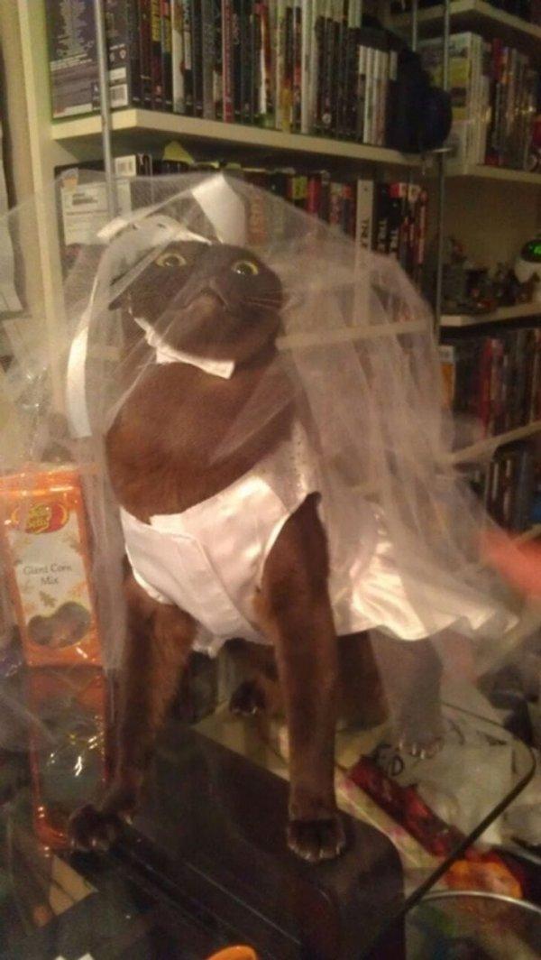 Немного забавных и нелепых свадебных снимков