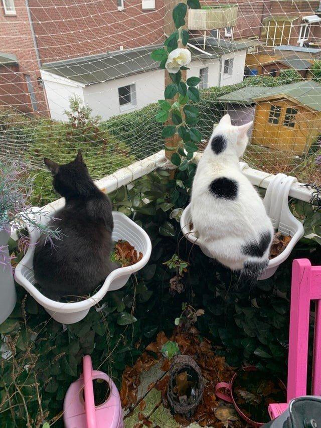 Домашние животные, которые выбрали необычные места для отдыха