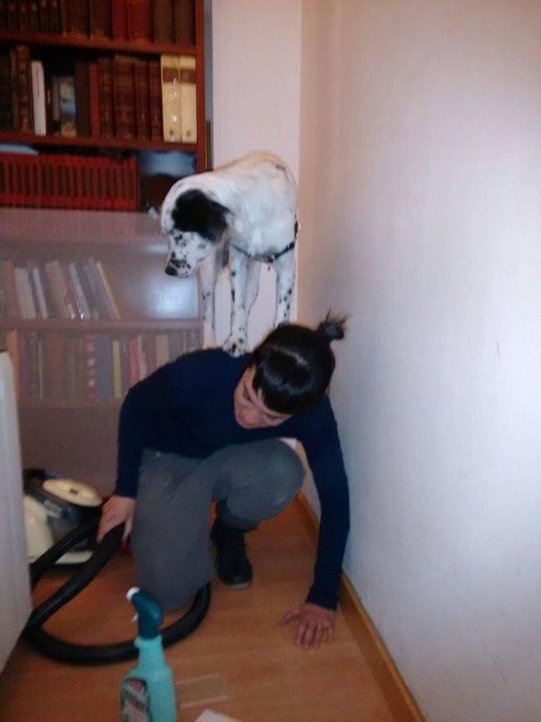 Позитивная подборка снимков про трусливых собак
