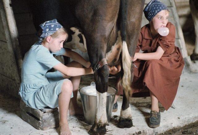 Как устроена тайная жизнь амишей
