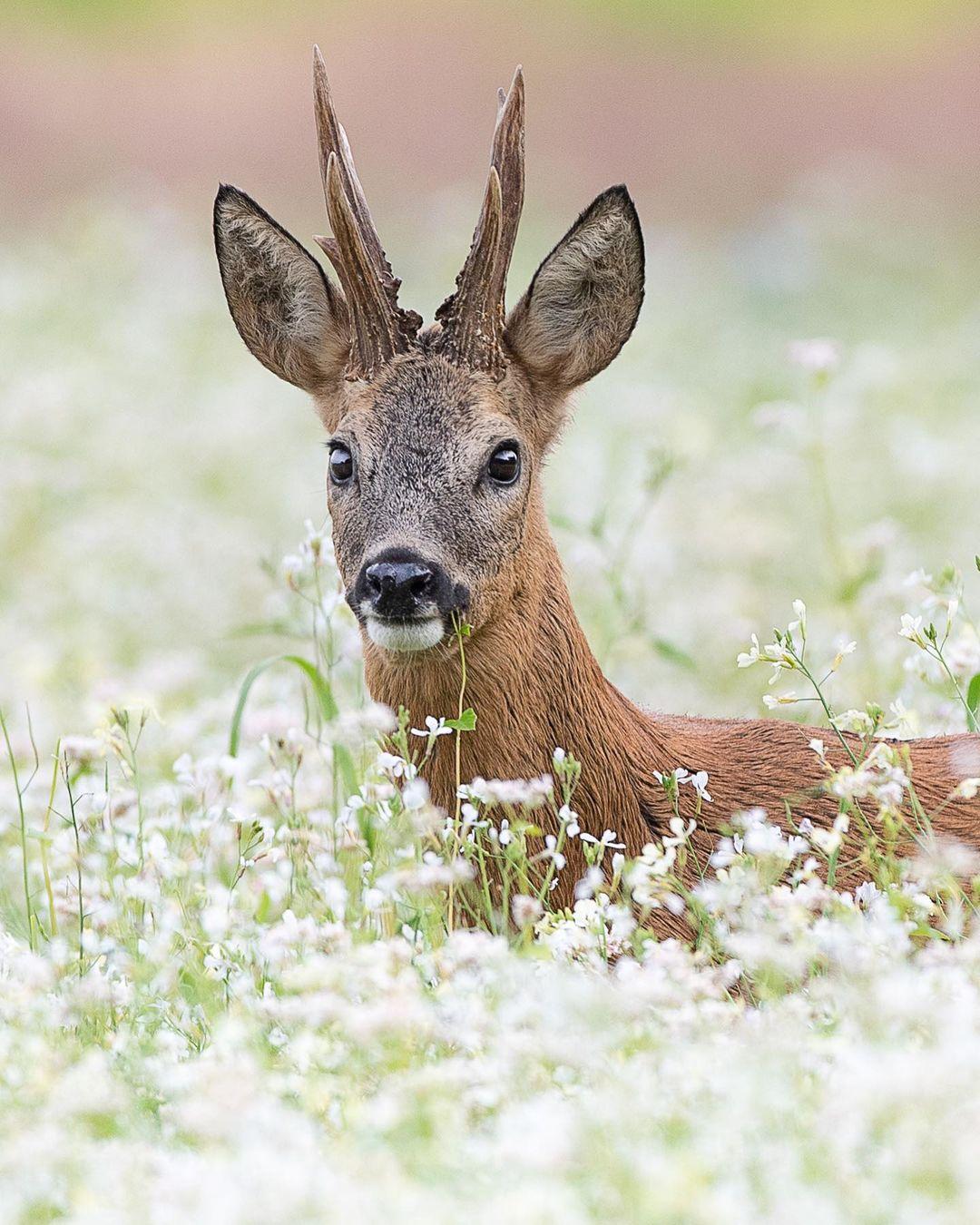 Красивые дикие животные на снимках Дика Ван Дуйна Duijn, Своими, появилась, впервые, Дуйна, снимках, животные, дикие, Красивые, httpswwwinstagramcomdickvanduijnЗапись, человек12345678910111213141516171819202122232425Источник, более, Instagram, делится, работами, фотографии, талантливый, ландшафтной, животных, природе