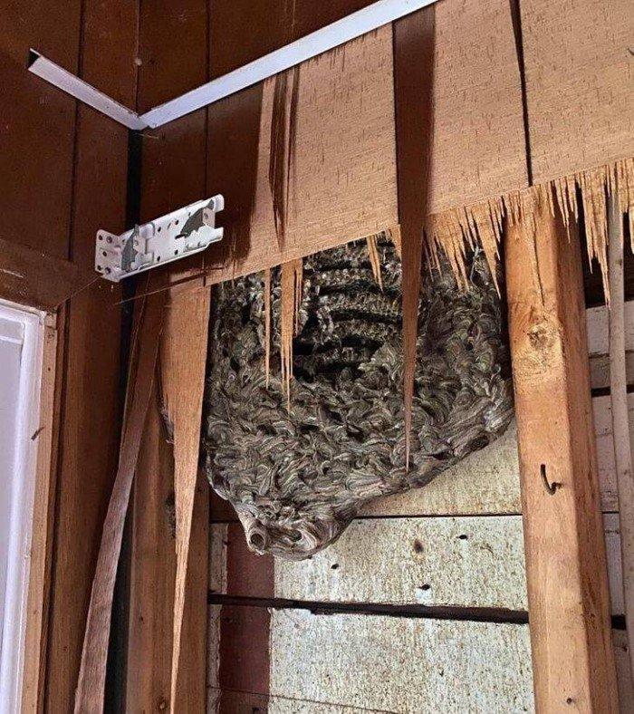 Разные неожиданные находки в жилых домах