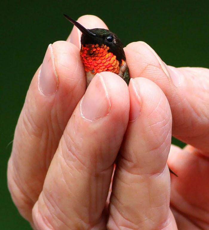 Снимки настолько крошечных животных, что они помещаются на пальцах