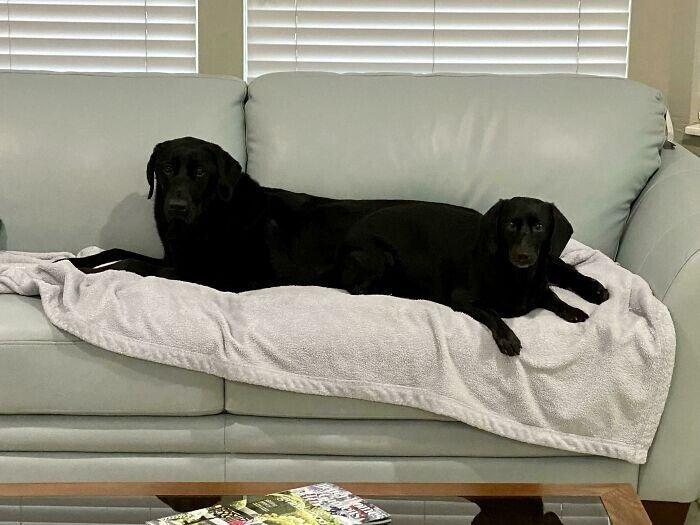 Уморительные снимки с собаками, которые сломались