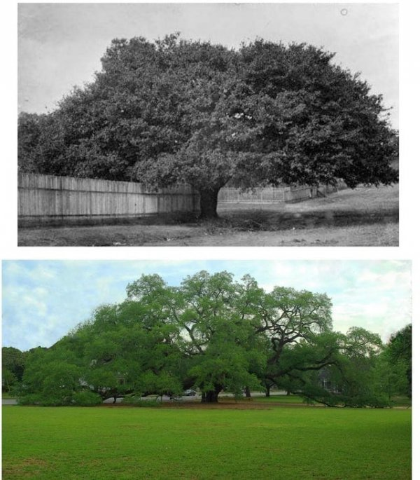 Сравнительные снимки покажут, как быстро меняется мир вокруг нас