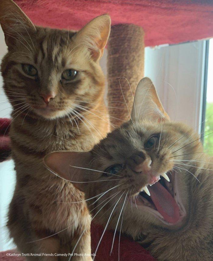 Уморительные снимки животных с конкурса Comedy Pet Photo Awards 2021