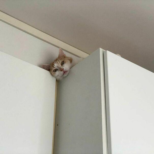 Внимание, вы находитесь под кошачьим наблюдением