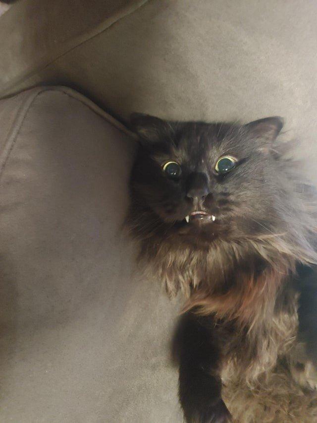 Котики показали свои острые зубки и вызвали у людей умиление