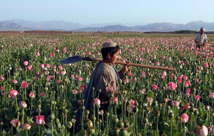 Почему в Афганистане идёт постоянная война?