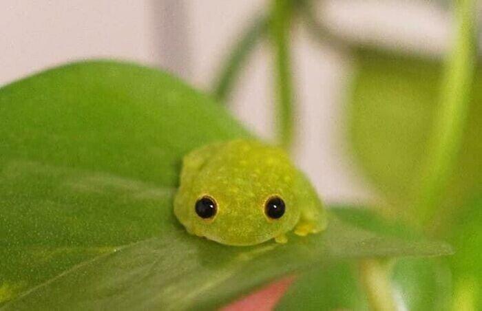 Снимки милых и смешных лягушек, которые заставят улыбнуться Животные