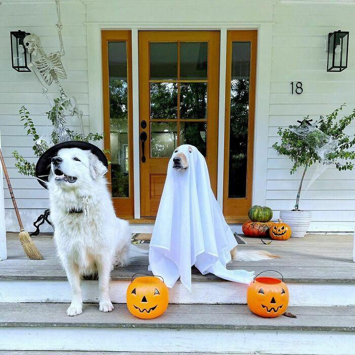 Домашние животные в забавных хэллоуинских костюмах